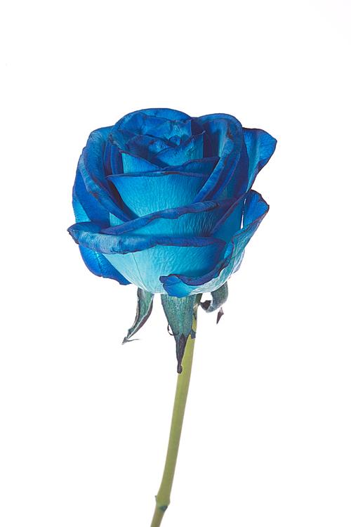 Flower (uaf43)036