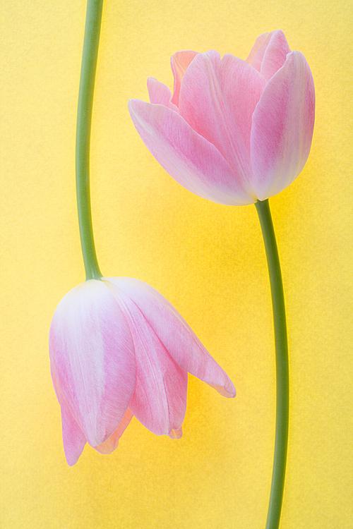 Flower(uaf43) 112