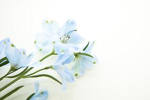 [PHO235] 봄의메세지173
