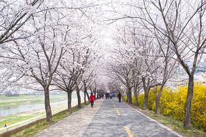 벚꽃세상 112