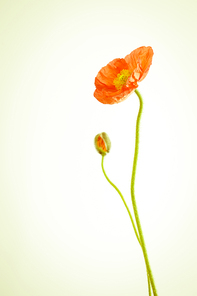 꽃 071