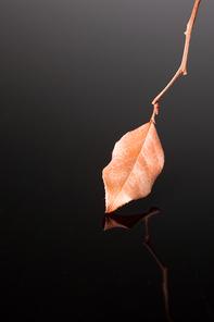 가을 오브젝트 084