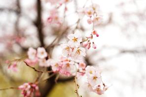 봄 157