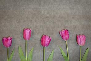 봄이 왔나봄79 (GIONE)