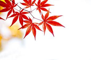 가을 34