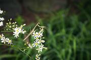 자연과꽃 020