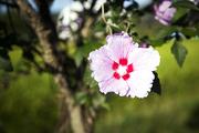 자연과꽃 053