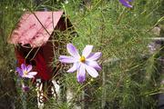 자연과꽃 131