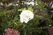 자연과꽃 132