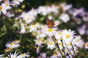 자연과꽃 137