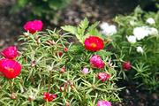 자연과꽃 139