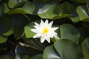 자연과꽃 151