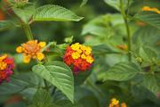 자연과꽃 154