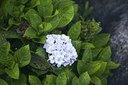 자연과꽃 158