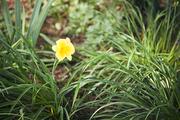 자연과꽃 161