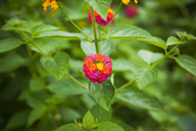 자연과꽃 162