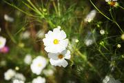 자연과꽃 163