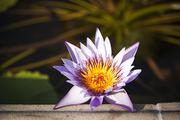 자연과꽃 166