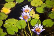 자연과꽃 167