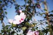 자연과꽃 173