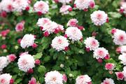 자연과꽃 174