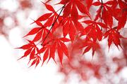 가을 풍경 010