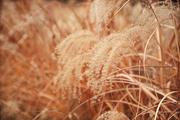 가을 풍경 017