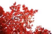 가을 풍경 033