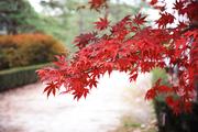 가을 풍경 035