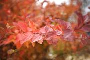 가을 풍경 039