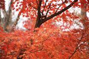가을 풍경 040