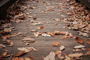 가을 풍경 042
