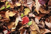 가을 풍경 044