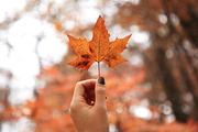 가을 풍경 046