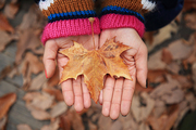 가을 풍경 047