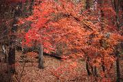 가을 풍경 049
