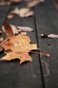가을 풍경 051