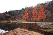 가을 풍경 067
