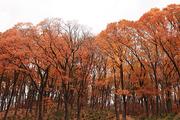 가을 풍경 073