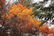 가을 풍경 074