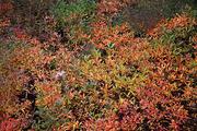 가을 풍경 087