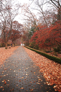 가을 풍경 090