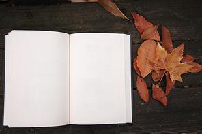 가을 풍경 081