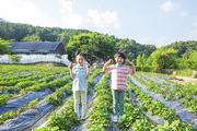 어린이농촌체험 254