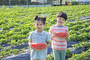 어린이농촌체험 281