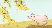 돼지해 011