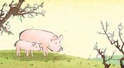 돼지해 003