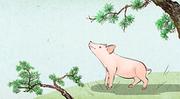 돼지해 007