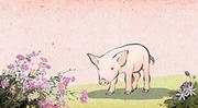 돼지해 009