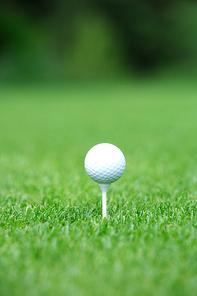 Golf(골프) 017